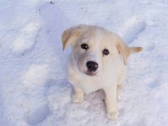 Snow and a puppy!? Couldn't get much better :)