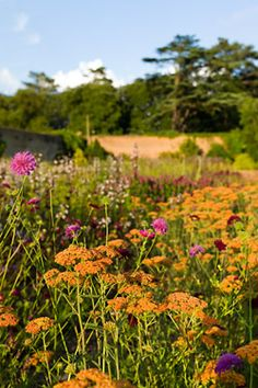 The Walled Gardens : Visitor Information : Holkham Hall and Estate - North Norfolk, England