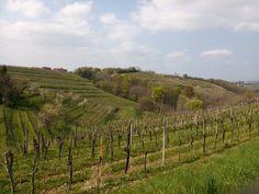 Paesaggio di collina al confine tra Slovenia e Friuli