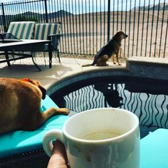Having breakfast by the pool with Buddy and Bane.