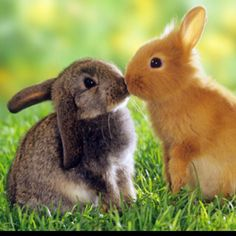 jsa;didjfkasdjf why can't i just have a bunny right now?!