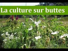 La culture sur buttes 2 - YouTube