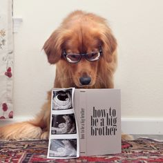 The Easiest Way to Relax during Pregnancy - Pregnancy announcement ideas - - Babys - Schwanger Ideen Baby Kind, Baby Love, 3rd Baby, Baby Baby, Foto Baby, Everything Baby, Pregnancy Photos, Pregnancy Announcement Dog, Funny Pregnancy