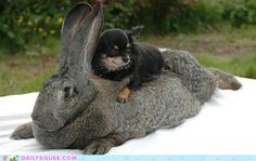 Little puppy, giant bunny