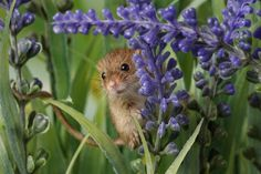 Field Mouse by Russ Hoban on 500px