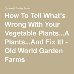 How To Tell What's Wrong With Your Vegetable Plants...And Fix It! - Old World Garden Farms