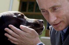 Bladimir Putin (Rusia). Koni, un labrador de quince años se le permite participar en la mayoría de las reuniones de su amo.