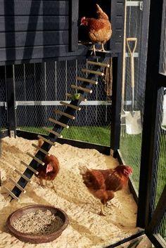 Sincere substituted chicken coop backyard Visit our Chicken Ladder, Cute Chicken Coops, Chicken Roost, Backyard Chicken Coop Plans, Chicken Coop Run, Chicken Cages, Chicken Coop Designs, Chickens Backyard, Inside Chicken Coop