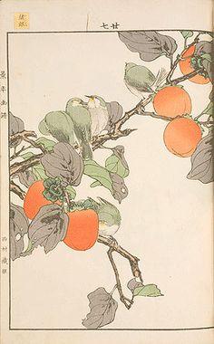 Imao Keinen (1845-1924), Keinen kachō gafu, vol. 3, autumn, Japanese white-eye and persimmons