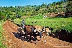 O Carro de boi ou carreta de bois, é um dos mais primitivos e simples meios de transporte, ainda em uso nos meios rurais, utilizado para o transporte de cargas (produtos agrícolas) e pessoas.