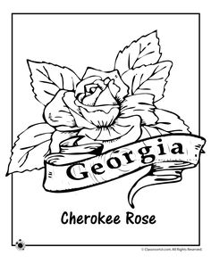 State Flower Coloring Pages Virginia State Flower Coloring Page