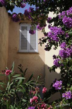 Rue de l'église Le Village, Rue, Plants, Plant, Planets