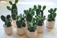 Succulents and Cactus: Photo Air Plants, Garden Plants, Indoor Plants, House Plants, Indoor Cactus, Cacti And Succulents, Planting Succulents, Planting Flowers, Bunny Ear Cactus