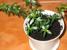 Növények, amelyet ha beviszel az otthonodba, minden kívánságod teljesül! Feng Shui, Minden, Plants, Flora, Plant, Planting