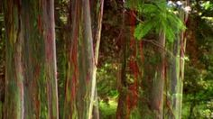 The Road to Hana Two in Diana Thater on Vimeo