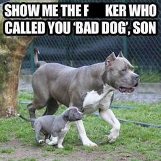 As a Pitbull, I'm Going To... - Cheezburger