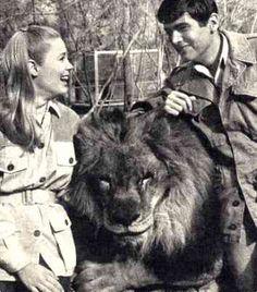 daktari, met de prachtige leeuw: Clearence.....