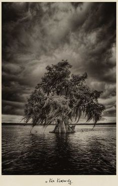 Cypress tree on Lake Russel - Disney Wilderness Preserve