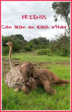 This ostrich and baby elephant snuggle is just heartwarming! - This ostrich and baby elephant snuggle is just heartwarming! This ostrich and baby elephant snuggle is just heartwarming! Unusual Animals, Animals Beautiful, Beautiful Creatures, Pretty Animals, Beautiful Beautiful, Nature Animals, Animals And Pets, Animals Images, Wild Animals