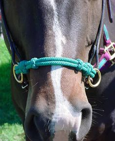 Daily Equine Forums - How to make and use a Sidepull