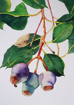 """Gum Tree Branch"" (Close-Up) by ZoyaMakarova — Botanical print of Australian native eucalyptus w/ gumnuts – Purple & Green home decor Art Prints, Botanical Drawings, Art Painting, Tree Branch Wall Art, Botanical Prints, Australian Art, Nature Art, Watercolor Flowers, Art"