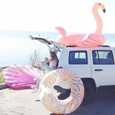 Pool floats, road trip, beach, girls trip, flamingo, palm, seashell