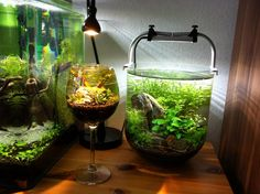 Wine glass aquascape, brilliant.....cool tank on the right......neat shape