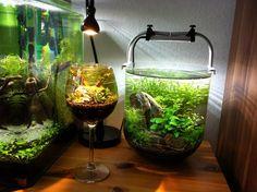 Wine glass aquascape, brilliant.....cool tank on the right......neat shape
