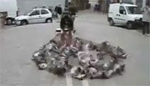 Video: Declaring War on Pigeons - A Funny Video on KillSomeTime