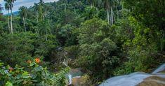 Grand Cayman, Cuba, National Geographic Photography, Porto Rico, University Of Connecticut, Invasive Plants, Plant Species, St Thomas, West Indies