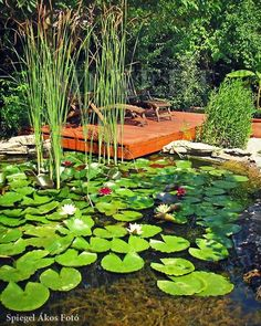 #kertitó #csobogó #kerttervező #kerttervezes #gardendesigner #kert #garden #stég 🌼🌼🌼 Goa, Stepping Stones, Outdoor Decor, Plants, Instagram, Home Decor, Stair Risers, Decoration Home, Room Decor
