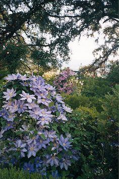 Theme Gardens | Shade Woodland | Michael Bates - English Country Garden Design, Inc.