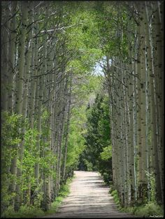 Aspen Alley! Saw this when traveling to Dixon, Wy for Tyler and Mandy's wedding.