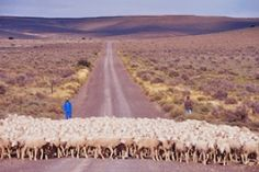 Amandelnek  Pass  Sheep farming coutry par excellence