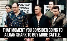 That moment.. Loan Shark, Show Cattle, Livestock, Cows, Agriculture, In This Moment, Life, Style, Swag