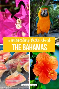 Things To Know About The Bahamas. Discover more about The Bahamas than just its sandy beaches and dreamy blue skies. Here are 6 interesting things to know about the island nation. | Bahamas Travel | Travel To The Bahamas | What To Know About The Bahamas | Bahamas Trip | Bahamas Vacation | Caribbean Travel Bahamas Vacation, Vacation Trips, Travel Advice, Travel Tips, Caribbean Vacations, Iceland Travel, Road Trip Usa, Blue Skies, Sandy Beaches