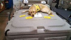 We knew Tuff Spas' hard top hot tub cover was Tuff.  Apparently it is also comfortable :)  www.coloradocustomspas.com