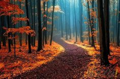 korku-filmi ormanlari-White-Carpathians-resim