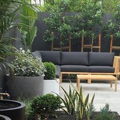 Manly courtyard garden featuring a lush textured planting scheme and pots from Indoor Outdoor Living, Outdoor Rooms, Outdoor Sofa, Outdoor Decor, Garden Makeover, Black Garden, Deck Decorating, Garden Features, Grey Walls