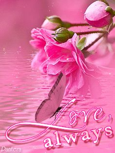 Love, Always ♡ Forever And Forever! Roses Gif, Flowers Gif, Beautiful Butterflies, Pretty In Pink, Beautiful Flowers, Movement Pictures, Love You Images, Rosa Rose, Photo Background Images