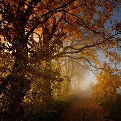 Paisaje #otoño #paisaje #lugar @pintohue