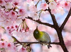La naturaleza!! simplemente hermosa!!