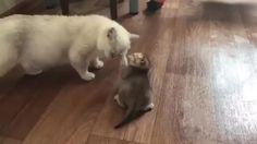 Kitten Has The Perfect Escape