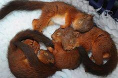 Sleeping little squirrels))))) So cute)