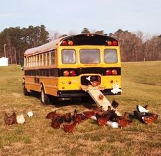 21 Coolest Chicken Coops. I like the bus one. It's awesome. Could hold a lot of chickens!