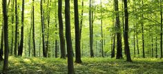 Rural Forest
