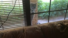 My smart cat knocks on window when she wants inside.