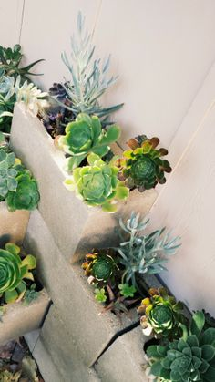 Succulents On Pinterest Succulent Wall Propagating