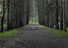 Parallel Pines - Stoney Creek Metro Park    https://www.facebook.com/photo.php?fbid=229204693797316=a.229195797131539.72073.228911757159943=3