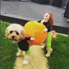 2019 Hot Pet Dog Pumpkin Halloween Costume oncetwo 2019 Hot Pet Dog Pumpkin Halloween Costume oncetwo The post 2019 Hot Pet Dog Pumpkin Halloween Costume oncetwo appeared first on Halloween Costumes. Funny Animal Videos, Cute Funny Animals, Cute Baby Animals, Funny Dogs, Animals And Pets, Pumpkin Halloween Costume, Dog Halloween Costumes, Pet Costumes, Primitive Halloween Decor